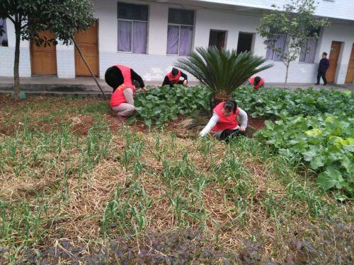 图为志愿者们正在清理菜园杂草