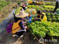 7项行动、30多个项目,广州社工助力乡村振兴